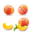 ripe peach fruit with leaf isolated realistic vector image