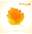Autumn watercolor leaf vector image