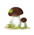 Two ceps isolated on a white background vector image