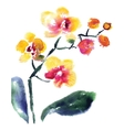 yellow orchid isolated on white vector image
