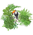 tropical plants and sitting toucan vector image