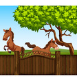 Two brown horse in the field vector image