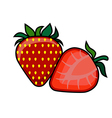Strawberry on a white background vector image