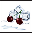 ice cubes drops of water snd cherry berries vector image