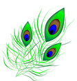 Peacock quill vector image