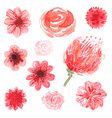 Watercolor flowers floral collection vector image