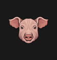 head of pig face of of farm animal hand drawn vector image