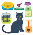 colorful cat accessory cute animal icons vector image