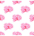 watercolor pink peony seamless pattern botanical vector image