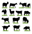 goats vector image vector image