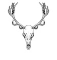 Sketch Deer Skull vector image
