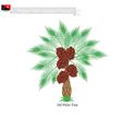 Coconut Tree A Native Tree of Papua New Guinea vector image