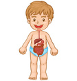 Little boy and digestive system vector image