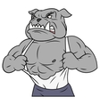 Aggressive bulldog tearing his shirt vector image