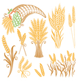 design elements corn grain vector image