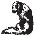 charles spaniel black white vector image