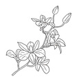 floral elements hand drawn vector image