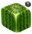 Ripe juicy delicious square watermelon vector image