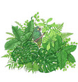 tropical plants and sitting parrot vector image vector image