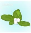 Christmas mistletoe berry in simple cartoon style vector image