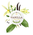 Label with type design and vanilla plant vector image
