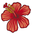 Beautiful red hibiscus flower vector image