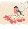 Cute Bullfinch on the branch of rowan vector image vector image