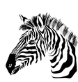 Portrait of zebra on the white background vector image