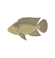 tilapia fish vector image vector image