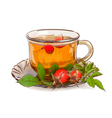 Tea from a dogrose vector image
