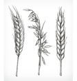 Crops wheat and oat sketches vector image