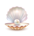 Pearl Shell Realistic Close Up Image vector image