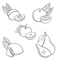 drawing fruits vector image