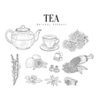 Natural Ingredients And Tea Isolated Hand Drawn vector image