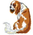 chestnut cavalier king charles spaniel vector image