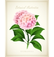 Hydrangea Botanical vector image vector image
