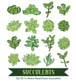 Succulents Hand Drawn 16 Set Seamless vector image