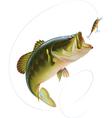 Largemouth Bass vector image