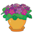 African violets vector image