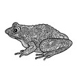 frog isolated ornamental doodle line patterned vector image