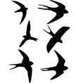 swalows vector image