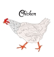 Bird chicken hen vector image