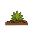 plant nature ecology vector image