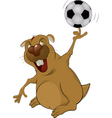 beaver the soccer player vector image