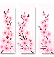 Three spring banners with blossoming sakura vector image