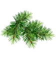 Green Christmas pine tree branch vector image