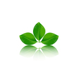 Leaves on white background vector image