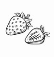 strawberry black vector image