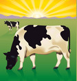 cows at sunrise vector image