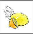 drawing lemon vector image